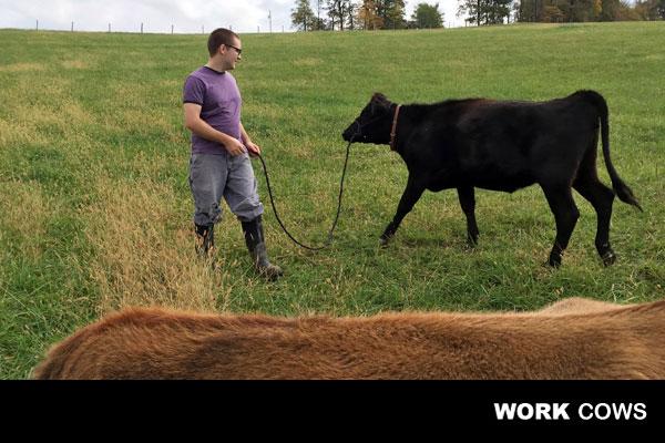 dairy_farmer_cows_land