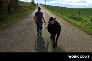 working_bovine_farmer